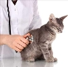 Ветеринарные клиники в Гвардейске